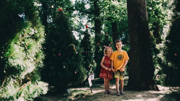 Siblings Amelie, 5, and Xavier Bryant, 7, of Calwell, playing amongst the Christmas trees.