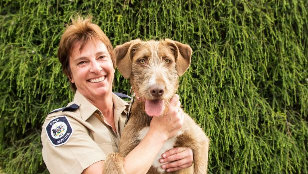Former RSPCA ACT inspector Catherine Croatto has been awarded the inaugural Animal Defenders Office's animal protection ...
