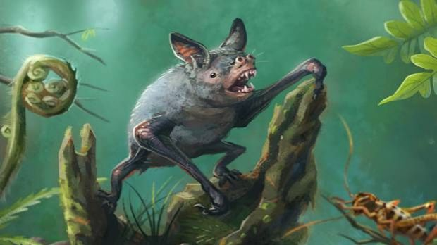 An artist's impression of a New Zealand burrowing bat, Mystacina robusta, that became extinct in the 1960s. The new ...