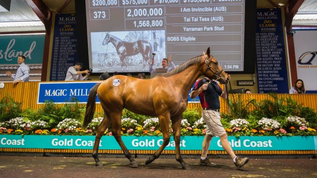 Lot 373, the $  2 million colt, at Magic Millions 2018.