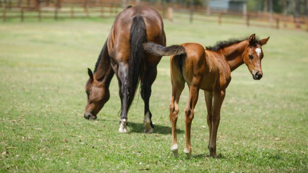 Terry Snow hopes to set up a world-class breeding facility at Willinga Park.