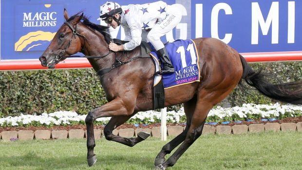 Composure: Sunlight is now the equal favourite for the Golden Slipper after her Magic Millions win.