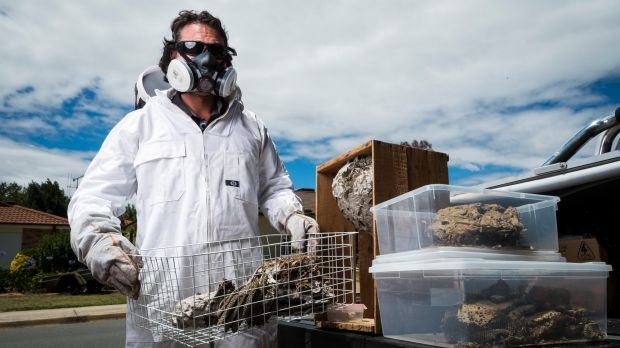 ACT pest control specialist Jim Beriesheff with wasp nests he has removed.