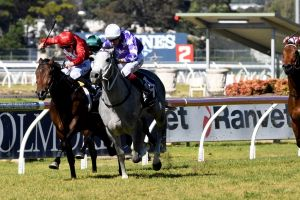 On the rise: Unbeaten D'argento wins at Rosehill in July.