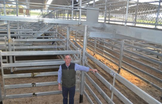 Rohan Arnold in one of the cattle pens at SELX, Yass.