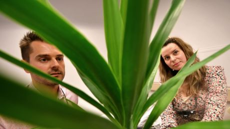 Eye and Ear Hospital doctors and article co-authors Adrian Dragovic and Maria Vartanyan examine a yucca from a safe distance.