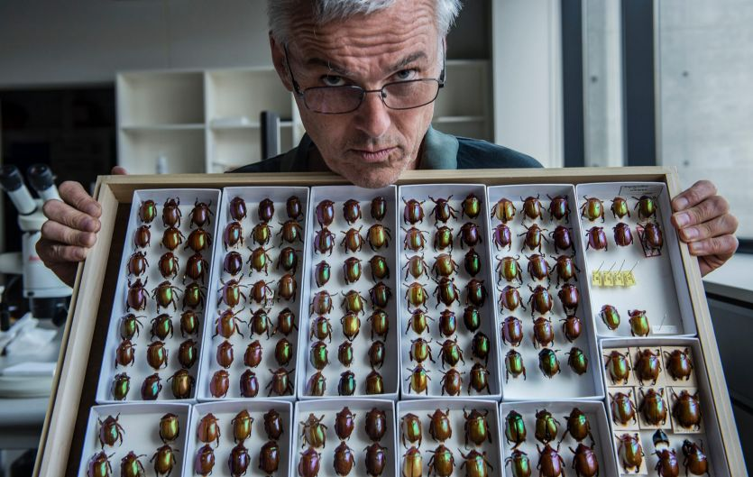 Chris Reid with a beetle collection at Australian Museum.
