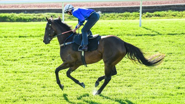 """""""This is an interesting way to show the general public a behind the scenes aspect of Winx"""": Chris Waller."""