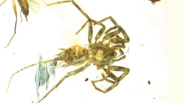 The Cretaceous arachnid Chimerarachne yingi, resembling a spider with a tail, was found trapped in amber in Myanmar ...