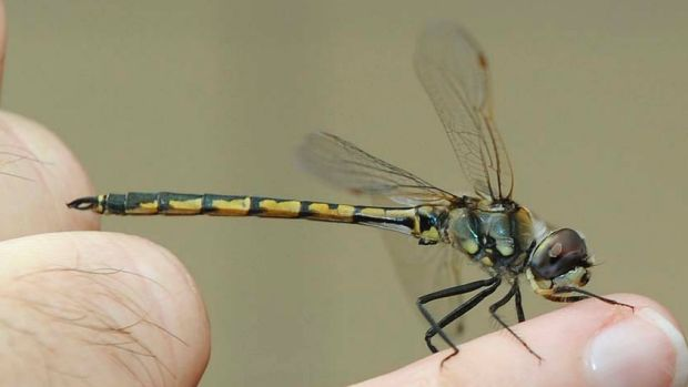 Dragonflies wings force bacteria to tear themselves a part.