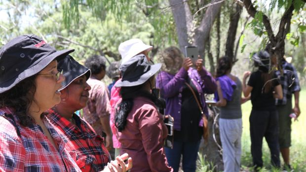 Walalangga students share cultural and environmental knowledge with community elders and local ranger groups, both in ...