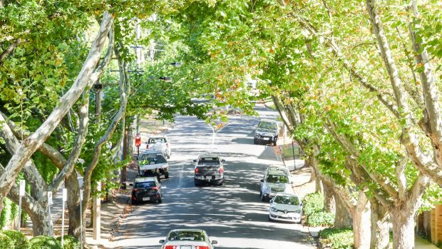 Owners or developers may be asked to pay cash as security for failing to protect trees across Stonnington.