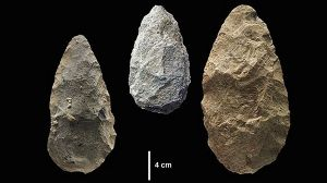 A photo of older, more archaic handaxes used by early humans in East Africa, before 320,000 years ago. image source ...