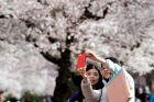 Donna Kwan, right, takes a photo with her daughter, Jamie Kwan, with cherry blossoms behind, on the first day of spring ...
