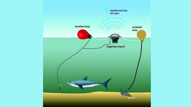 MART drumlines are a key feature of NSW's shark bite mitigation measures.