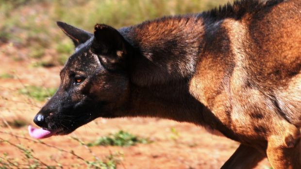 Packs of feral dogs have killed six children in India.