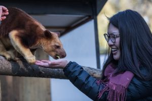 Canberra Times journalist is a Zoo keeper for a day at the NAtional Zoo and aquarium. Photo by Sitthixay Ditthavong.