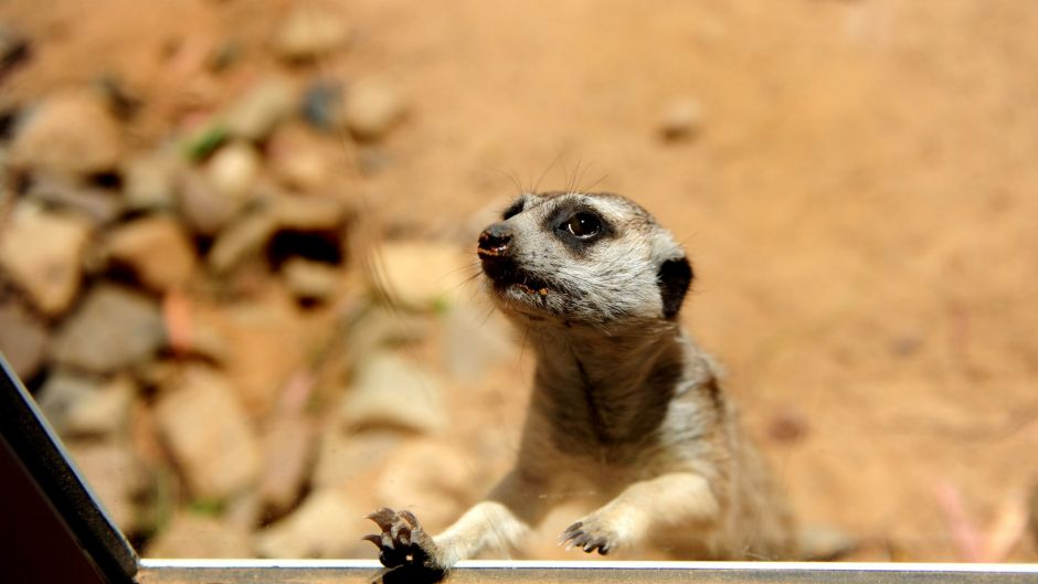 28 DECEMBER 2010, news, Canberra Times, photo Melissa Adams, story Stephanie Anderson. The National Zoo and Aquarium ...