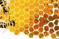 Funny honey. Bees. Honeycomb. Honey tainted with impurities. Illustration: Matt Davidson