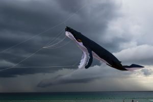 Kites are flown over Bondi beach ahead of the 40th annual Festival of the Wind as a thunderstorm passes by on 07 ...