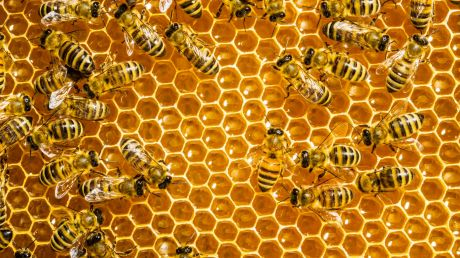 Bees send signals to each other to get busy