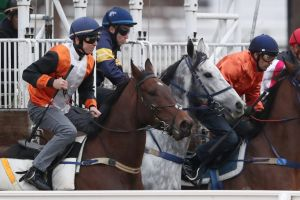 Chautauqua jumps at a barrier trial at Flemington on Friday morning.