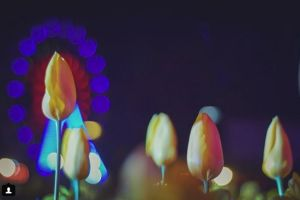 Reader pic by @jalooday. Tulips shining in the dark.