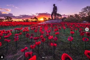 Reader pic by @simplycheeky Sunset at the field of poppies at the Australian War Memorial.