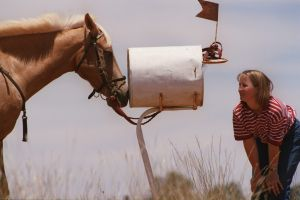 Susie Rose with her horse, Dandy, is pictured on her parents property in Narromine waiting for her HSC results.