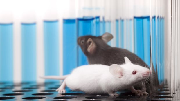 Researchers have implanted false memories into the brains of mice.