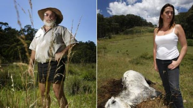Mountain massacre ...   Jim Kelton (left) says the  brumbies, must be controlled; Sharyn Townsend (right), at the sight ...