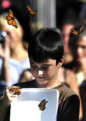 Dylan, a Middle Kinglake Primary School student, releases butterflies at a ceremony yesterday.