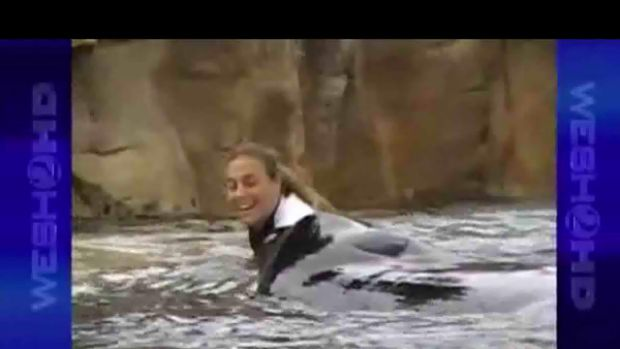 Moments before she died ... Dawn Brancheau plays with Tilikum.
