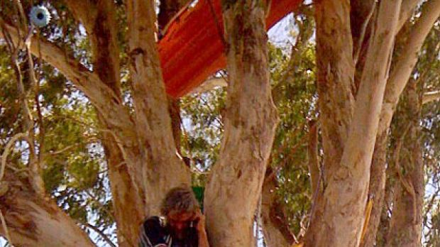 Richard Pennicuik has been in this tree for three month. Photo: Natasha Povey