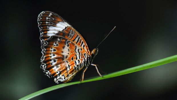 Butterflies are emerging up to 10 days earlier in spring than they did 65 years ago.
