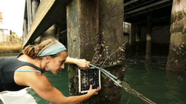 Foul play ... Fabiana Moreira tests the impact of discharge produced by seawater-based cooling systems.
