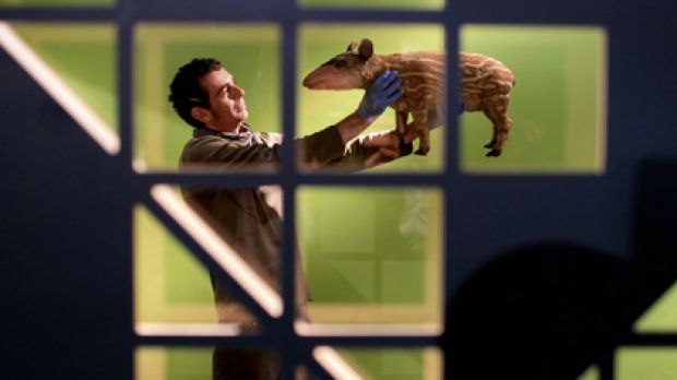 Biodiversity alive and kicking...designer Tanguy Le-Moing prepares a stuffed tapir for the Australian Museum's ...