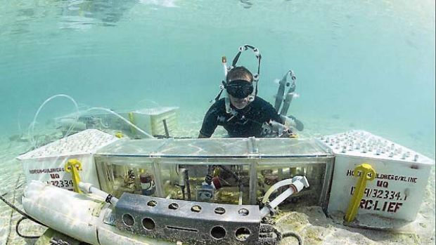Investigation ... the program will look at the damage of increasingly acidic conditions on the Great Barrier Reef.