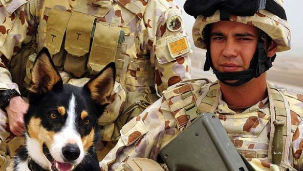 A duo lost ... Sapper Darren Smith  with Herbie, a bomb-detecting dog, at the base in Tarin Kowt. The dog also died on ...