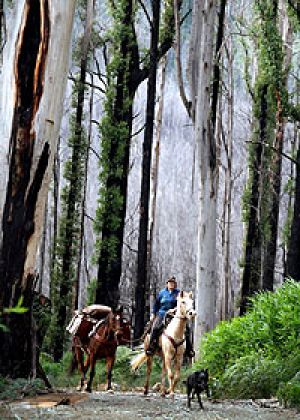 Jo-Anne Kasch with her horses on the Bicentennial National Trail near Marysville.