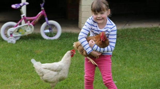 Maia Harman, 4, with hens that her mother, Lauryn Harman, raised after they had been rescued,