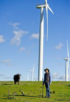 Prized bull George is quite peaceful under the wind turbines, says farmer Luke Osborne.