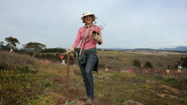 PhD student Kathy Eyles planting with other Greening Australia volunteers on Barrer Hill near the National Arboretum, ...