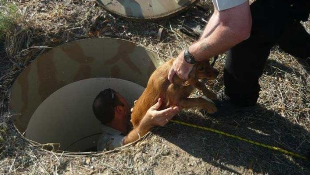 RSPCA WA inspectors pulled a dog from an underground puppy farm in 2014.