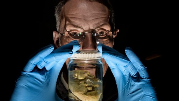 Melbourne Museum will open a biobank next year to store reproductive material. Dr Mark Norman is pictured with a ...