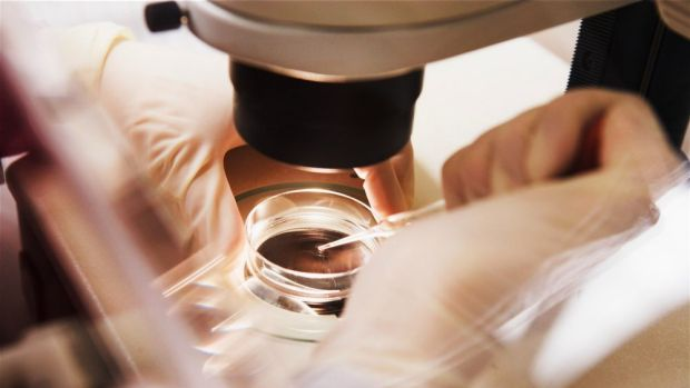 12,000 Australian babies were born thanks to IVF in 2010 alone.