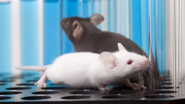 All eight mice pups were able to go on and reproduce naturally themselves.