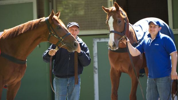 Accomodation for 120 horses at Randwick: Peter and Paul Snowden.