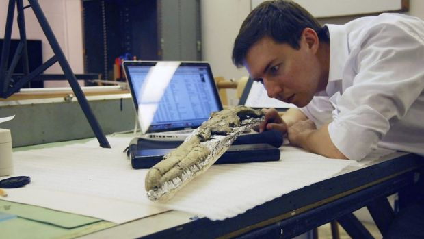 Paleontologist Dan Ksepka examines the fossilised skull of what may be the world's largest flying bird.