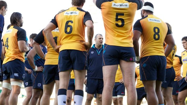 Under pressure: Waratahs coach Michael Cheika with his squad at training on Tuesday.